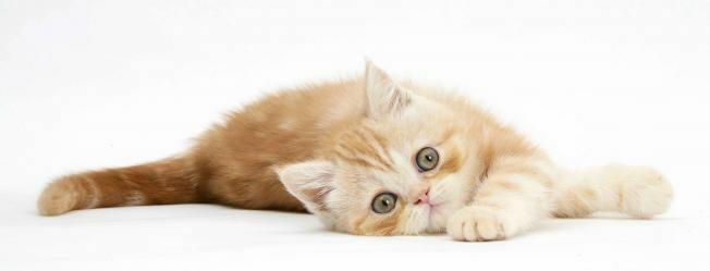 Fekvő cica 3D vonalzó 148 x 55 mm A