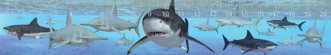 Cápák 3D hatású vonalzó  210 x 35 mm A