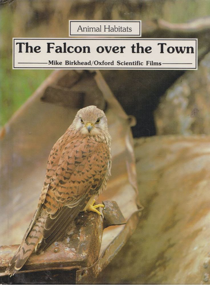 The Falcon over the Town