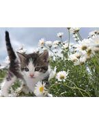 Virág cicával 3D képeslap 148x105mm B