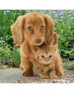 Kutya és macska 3D kártya  148 x 148 mm D