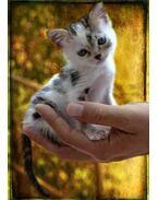 Macska tenyéren 3D képeslap 105 x 148 mm B
