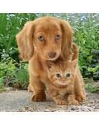 Kutya és macska 3D hűtőmágnes 75 x 75 mm M