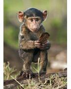 Kis majom 3D képeslap 148 x 105 mm B