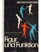 Figur und Funktion