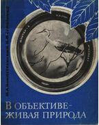 Objektívben az élő természet (В объективе - живая природа))