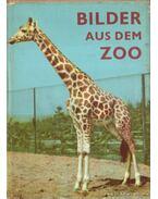 Bilder aus dem Zoo