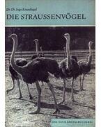 A struccmadár (Die Straussenvögel)