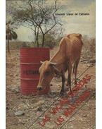 Las vacas gordas