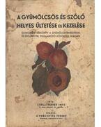 A gyümölcsös és szőlő helyes ültetése és kezelése
