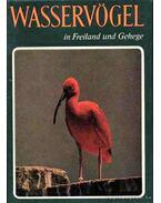 Wasservögel in Freiland und Gehege