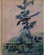 Utazás a madarak világába (Путешествие в мир птиц)