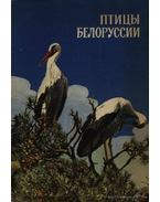 Belorusszia madarai (Птицы Белоруссии)