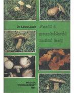 Amit a gombákról tudni kell