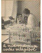 A mikroszkopium csodás világából