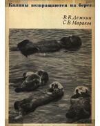 A tengeri vidrák visszatérnek a partra (Каналы возвращаются на берег)