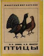 Madarak (Птицы)