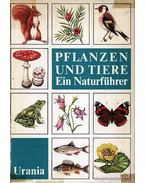 Pflanzen und Tiere (Növények és állatok)