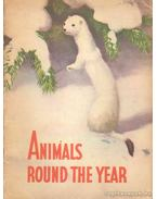 Animals round the year