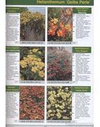 Évelő dísznövények