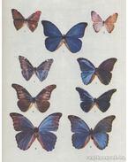 Fluturi exotici