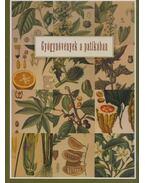 Gyógynövények a patikában