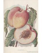 A gyümölcstermesztés szőlészet és kertészet összes ágainak gyakorlati ismeretei
