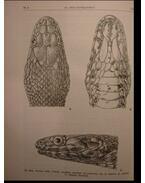 Hüllők - Reptilia