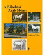A Bábolnai Arab Ménes - 1789-2014 - Hecker Walter