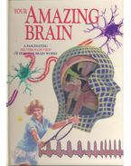 Your Amazing Brain - A Fascinating See-Through View of How Our Brain Works