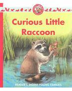 Curious Little Raccoon
