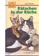 Katzhen in der Küche