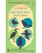 A Guide to Birdwatching