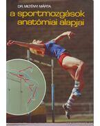 A sportmozgások anatómiai alapjai I.