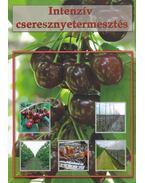 Intenzív cseresznyetermesztés