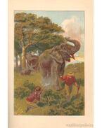 Hans Stark der Elefantenjager