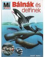 Bálnák és delfinek