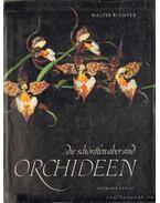 ...die schönsten aber sind Orchideen