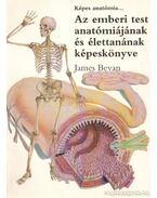 Az emberi test anatómiájának és élettanának képeskönyve