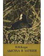 A szárcsa Lettországban (Лысуха в Латвии)