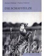 Die Schafstelze (Sárga billegető)