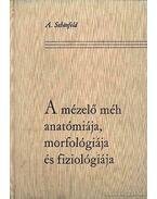 A mézelő méh anatómiája, morfológiája és filológiája