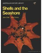 Shells and the Seashore