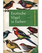 Exotische Vögel in Farben
