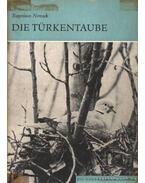 Die Türkentaube (A balkáni gerle)