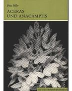 Aceras und Anacamptis (Bábukosbor és vitézvirág)