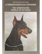 A dobermannvilág képekben
