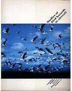 Studies of bird hazards to aircraft (Repülőgépek madárveszélyéről végzett tanulmányok)