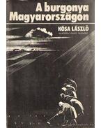 A burgonya Magyarországon