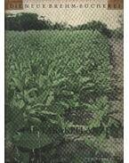 Die Tabakpflanze (A dohánynövény)